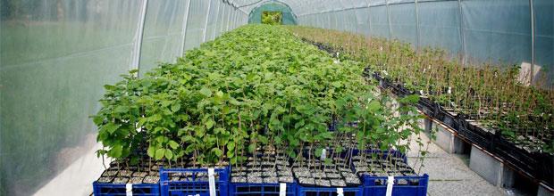 Piante Per Tartufi : Produzione piante da tartufo